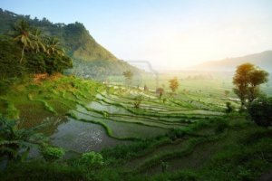 9634198-rice-tarrace-in-mountains-bali-indonesia