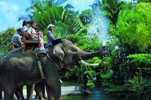 11075-elephant-safari
