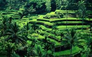 Bali-Landscape