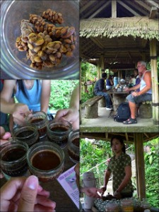 coffee-plantation-kintamani
